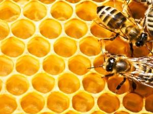 النحلة اللبنانية
